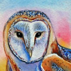 cropped-owl4.jpg